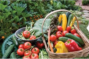 Les légumes brûle graisse bios ne contiennent pas de pasticides