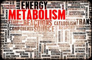 Trop stresser ralentit le métabolisme