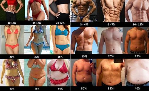 taux de gras